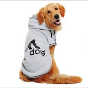 for Dog